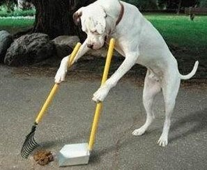 Dog Clearing up after himself