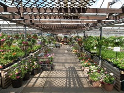 Barby Nurseries